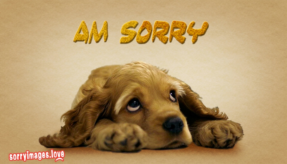 i am sorry dog images