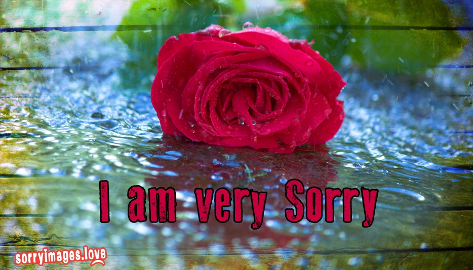 I Am Very Sorry @ Sorryimages.love