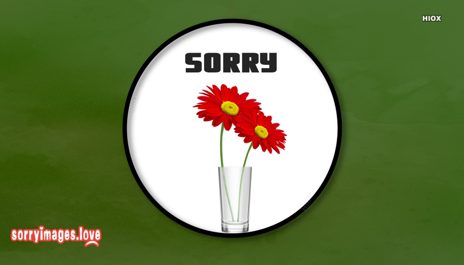 Sorry Flower Picture