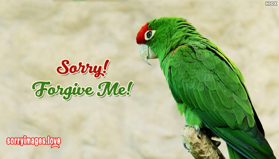 Sorry Forgive Dp Image - Sorry Images for Whatsapp Dp
