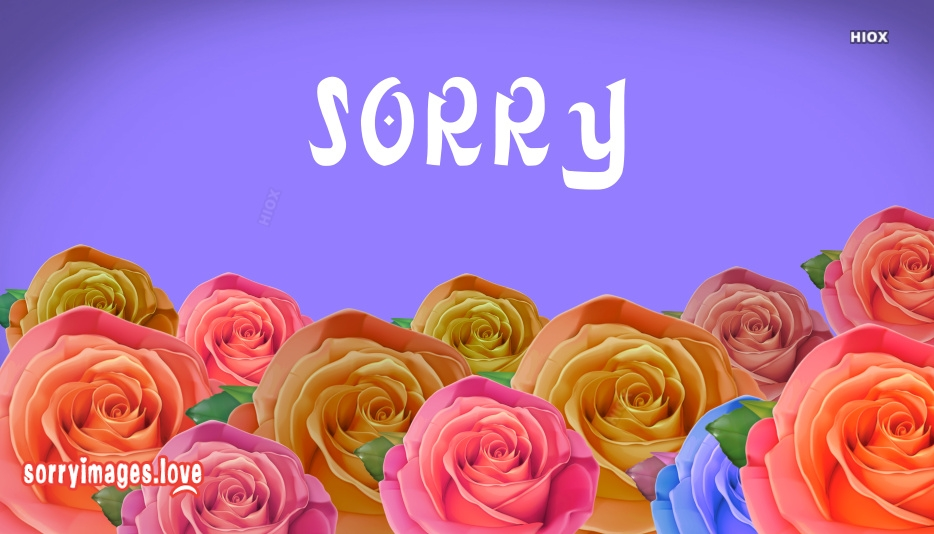 Sorry Image Rose