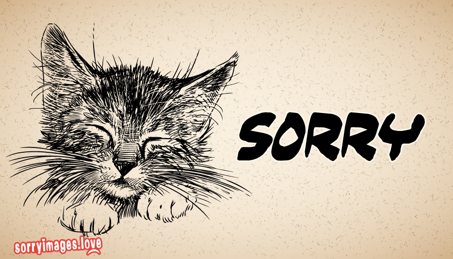 Cat Saying Sorry Pictures