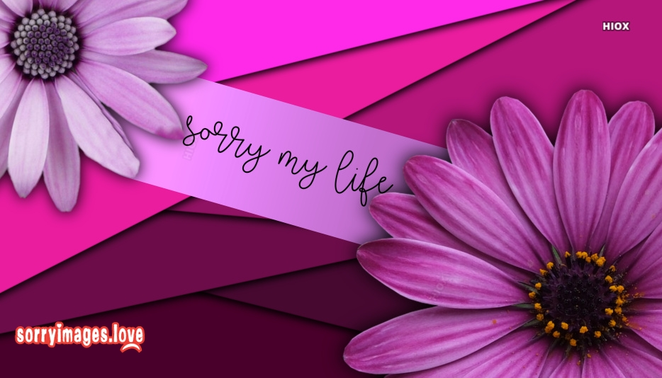 Sorry My Life Images, Pics