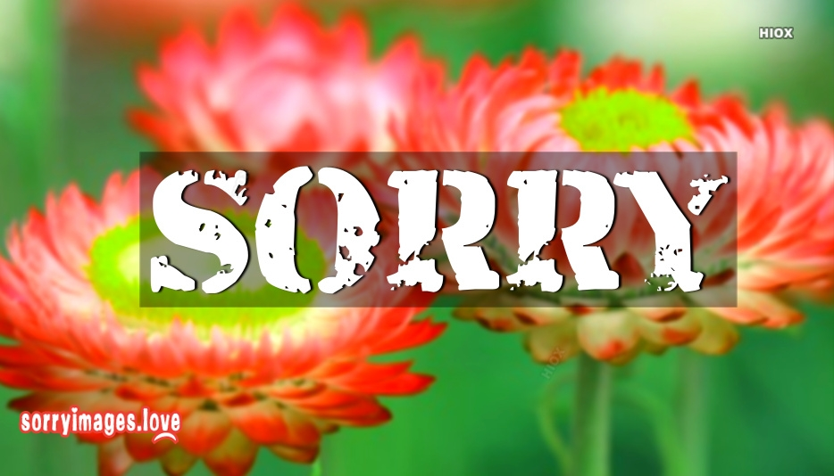 Sorry Pictures Hd