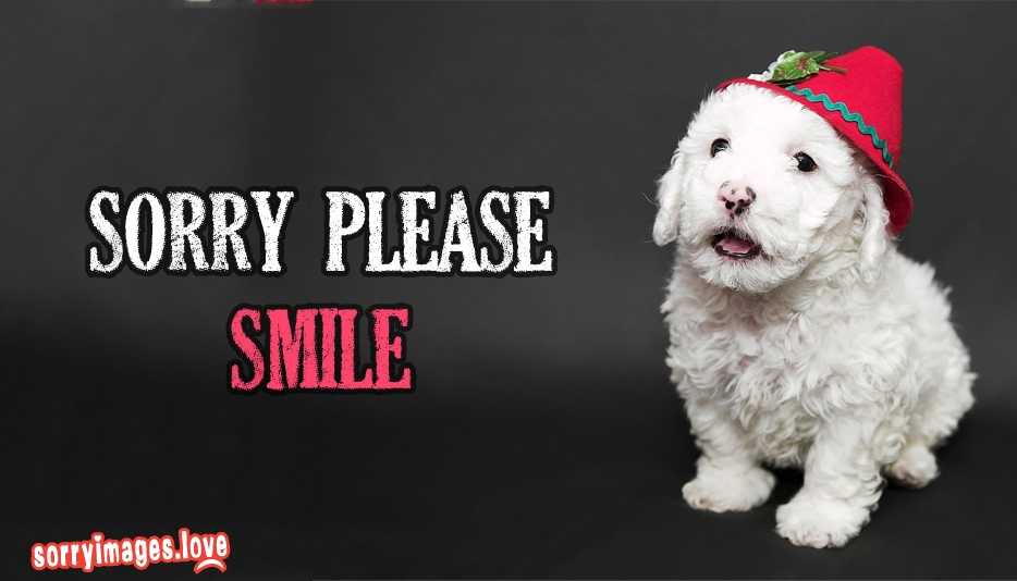 Sorry Please Smile  - Sorry Images for Wallpaper