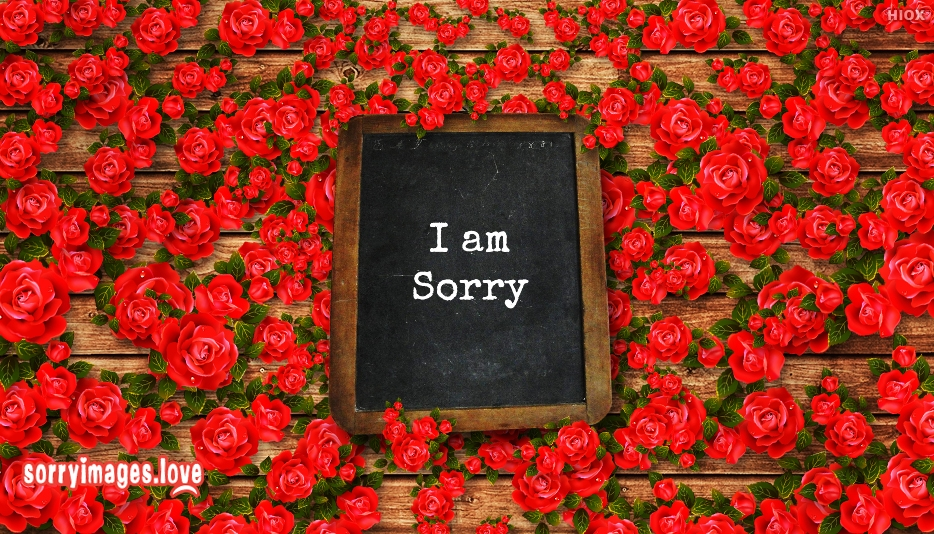 Sorry Red Rose Images