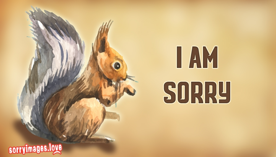 Sorry Squirrel  - I Am Sorry Images