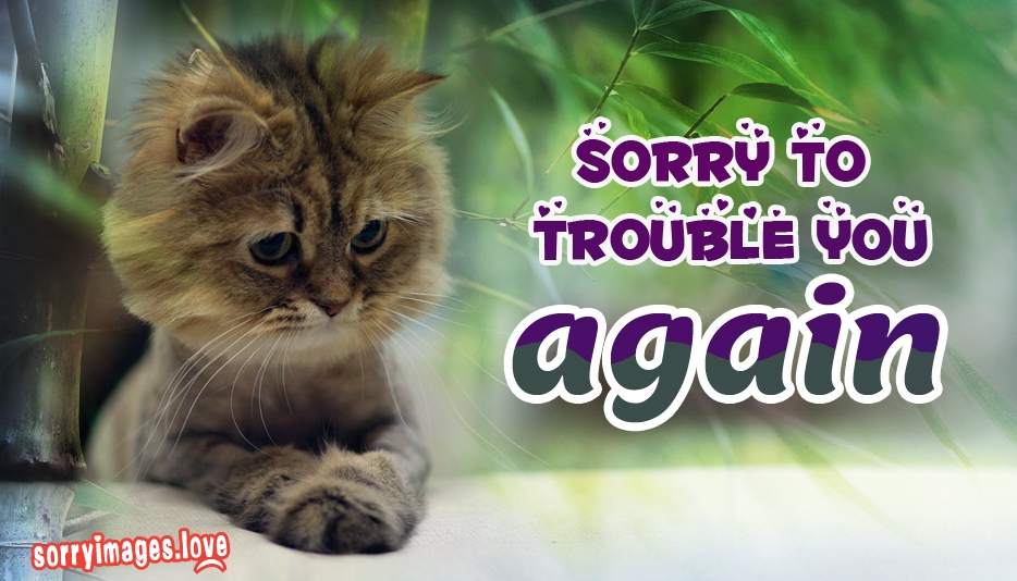 Sorry To Trouble You Again  - Sorry Images for Cat