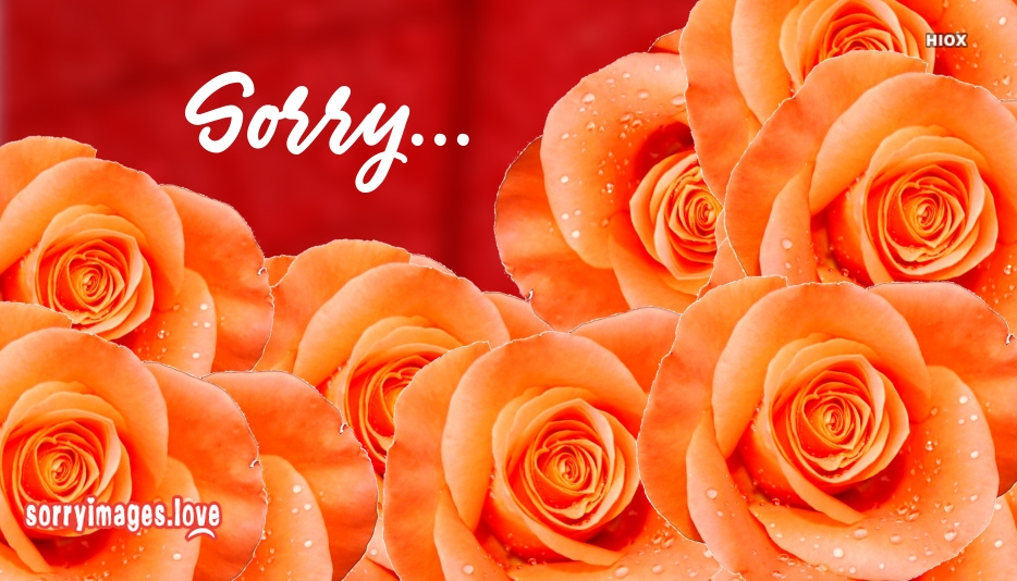 Sorry Images With Flowers
