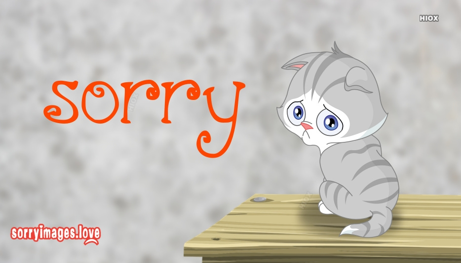 Sorry With Cat Image