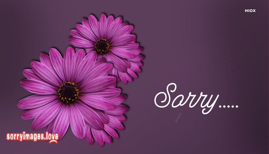 Sorry With Flowers Images