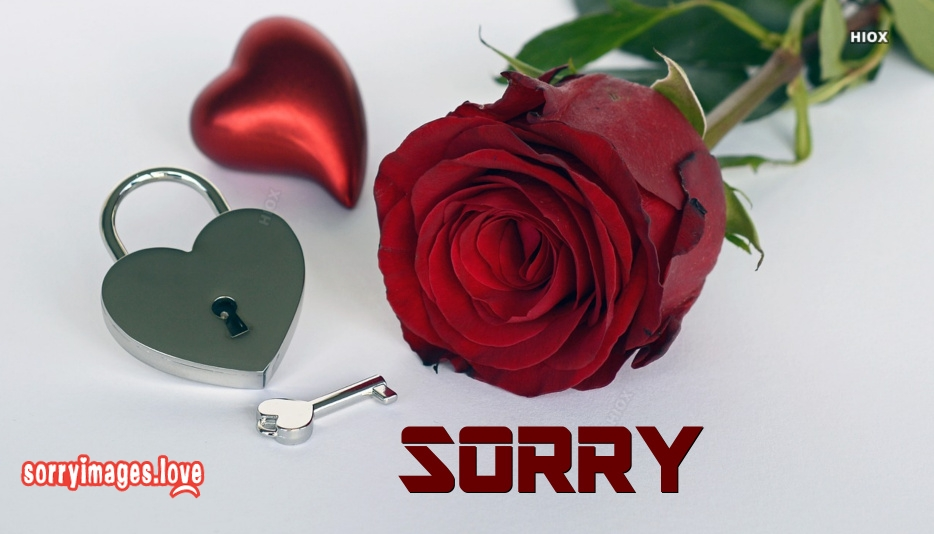 Sorry With Red Rose Images