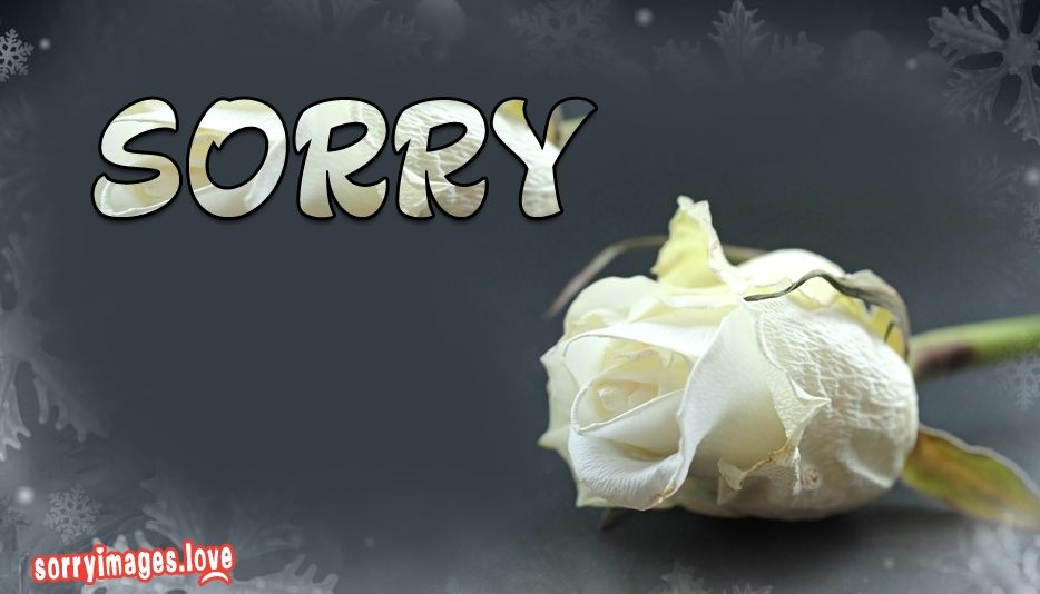 Sorry with White Rose - I Am Sorry Images