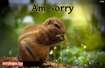 I Am Really Sorry SMS