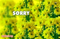 Sorry Flower