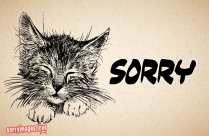 Kitten Sorry Images | Kitten Saying Sorry Pictures