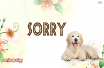 Sorry Puppy Images