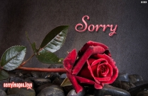 Sorry Forgive Dp Image
