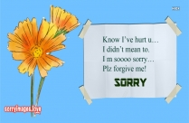 Sorry And Thank You Image